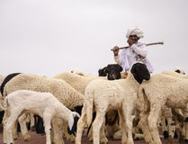 Rabari牧羊人 库存图片