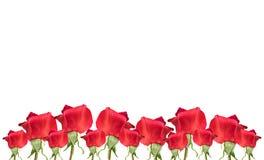 rabatowa czerwień wzrastał Zdjęcia Royalty Free