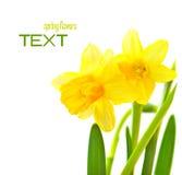 rabatowa kwiecista wiosna Obraz Royalty Free