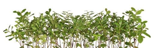 rabatowa kwiecista zieleń Obrazy Royalty Free