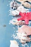 Rabatowa os morza sól i skorupy Zdjęcia Stock