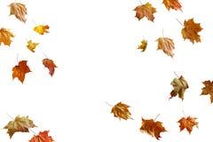 Rabatowa rama kolorowi jesień liście odizolowywający na bielu Zdjęcie Royalty Free