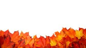 Rabatowa rama kolorowi jesień liście odizolowywający na bielu obraz royalty free