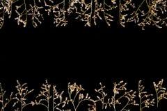 Rabatowa rama wysuszeni kwiaty na czarnym tle, mieszkanie nieatutowy, Odgórny widok zdjęcia royalty free