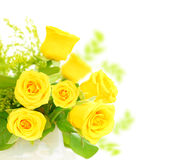 rabatowe świeże róże Fotografia Royalty Free