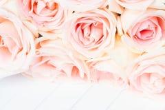 rabatowe świeże różowe róże zdjęcie royalty free