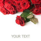 rabatowe czerwone róże Obraz Royalty Free