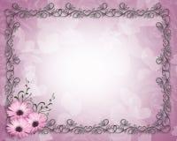 rabatowej stokrotki kwieciste purpury Fotografia Royalty Free
