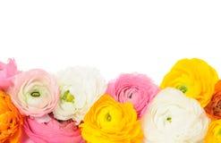 rabatowi kwiaty Zdjęcie Royalty Free