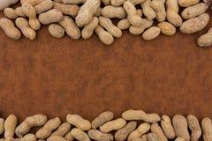 rabatowy arachid obrazy royalty free