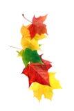 rabatowy jesień liść Obrazy Royalty Free