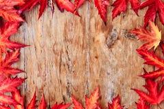 rabatowy jesień liść Zdjęcie Stock