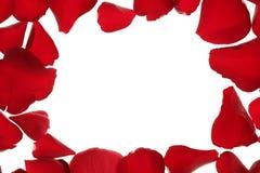 rabatowy kopii ramy płatków czerwieni róży przestrzeni biel Obrazy Stock