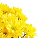 rabatowy kwiat Obrazy Stock
