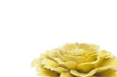 rabatowy kwiat Zdjęcia Royalty Free