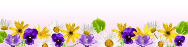 rabatowy kwiat Fotografia Royalty Free