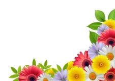 rabatowy kwiat Obraz Stock