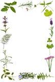 rabatowy kwiatu ziele liść Zdjęcia Royalty Free
