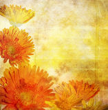 rabatowy kwiecisty Obrazy Royalty Free