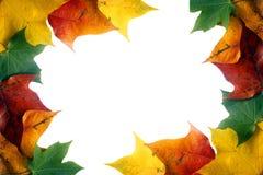 rabatowy liść Zdjęcie Royalty Free