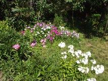 Rabatt i den gamla trädgården Arkivfoto