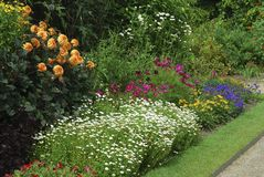 Rabatt med blandade växter Royaltyfria Foton