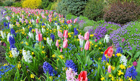 Rabatter på våren med frodiga färger, Victoria, Kanada Royaltyfri Bild