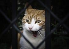 Rabbia del gatto Immagine Stock