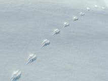 Rabbit's-Bahnen im Schnee Lizenzfreie Stockfotos