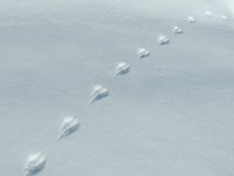 Rabbit's Tracks in the Snow. Detail Royalty Free Stock Photos