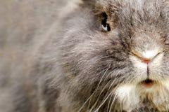 RabbitÂs sikt Arkivfoto