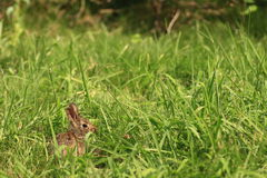 Free Rabbit Stock Photography - 10186092