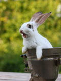 Rabbit. A beautiful rabbit sitting in a capacity Stock Images