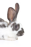 A rabbit Stock Photo