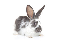 A rabbit Royalty Free Stock Image