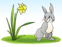 Rabbit. A rabbit looking to a narcissus Stock Illustration
