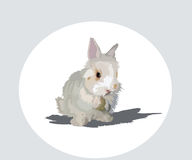 Rabbit. Image of fluffy rodent of with big ears rabbit Vector Illustration