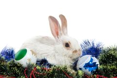 The rabbit Stock Photos
