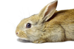 Rabbit 17 Stock Image