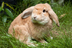 Rabbit Stock Image