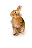 Rabbit. Decorative rabbit on a white background Stock Photo