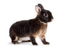 Rabbit. Stock Images