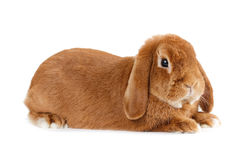 Rabbit. Stock Photos