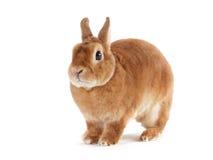 Rabbit. Stock Photography