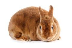 Rabbit. Royalty Free Stock Photos