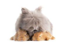Rabbit. Stock Image