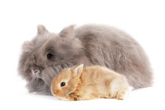 Rabbit. Stock Photo