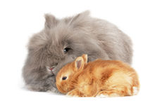 Rabbit. Stock Photos