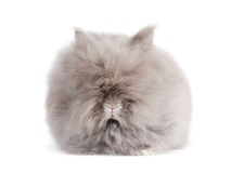 Rabbit. Royalty Free Stock Image