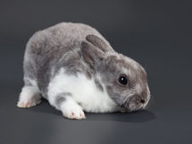 Rabbit. Stock Photography